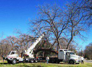 austin crane rental service